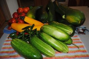 Cucumbers, squash, zucchini oh my!